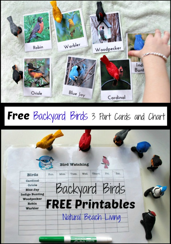Observing & Learning Backyard Birds with Free Printables, Best Bird Activities for Kids, Backyard Birds Watch Chart, Learning Backyard Birds and Bird Watching with Kids, Bird Activities for Preschoolers, Montessori Printables, Charlotte Mason Homeschooling, Nature Study, #birds #preschoolactivities #Montessori #Montessoriactivities #Homeschool