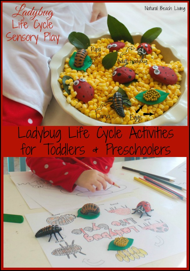 Life Cycle of a Chicken Activities with Egg Science for kids, This is a perfect homeschooling unit study for spring, Add these Spring activities to your kids daily schedule, Montessori learning Printables and activities