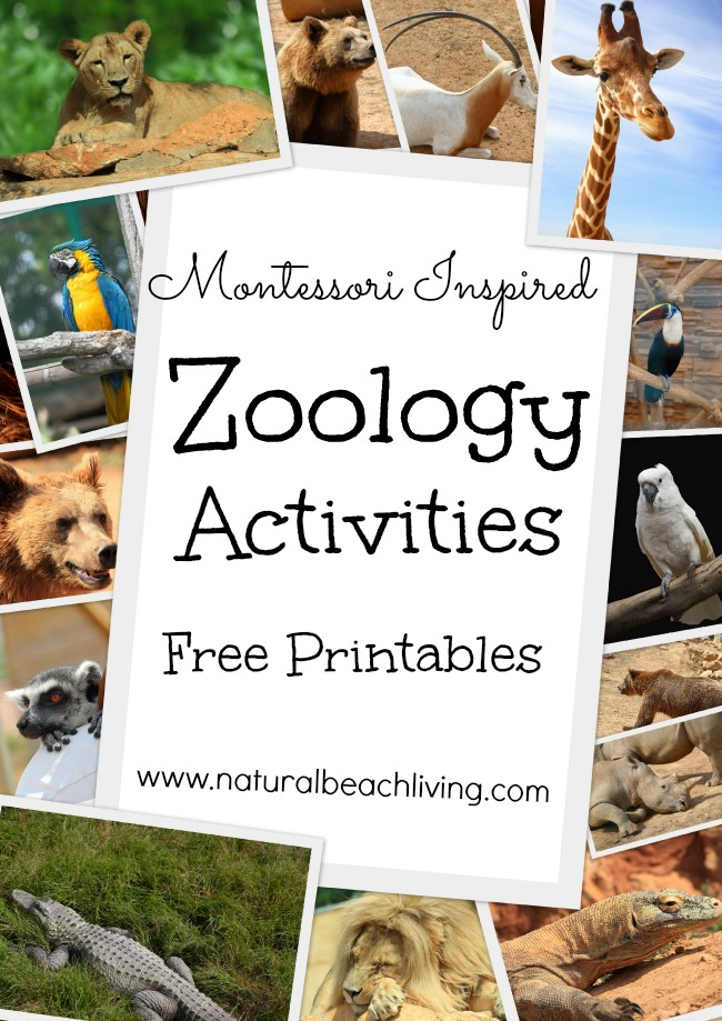 Animal Body Coverings, Animal Activities and Animal Printables