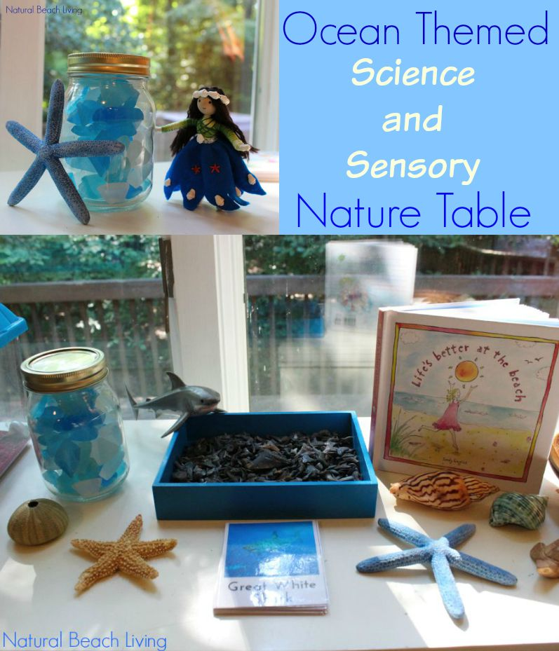 The Best Ocean Science Sensory Nature Table