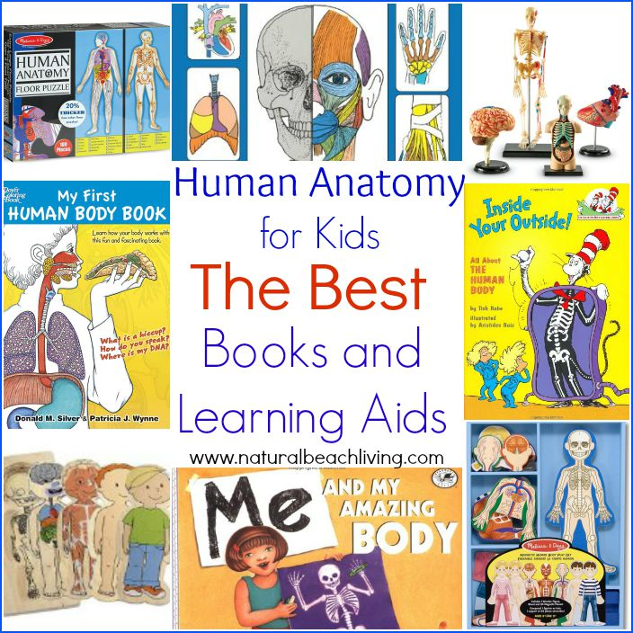 The Best Anatomy Books Learning Aids For Kids Natural Beach Living