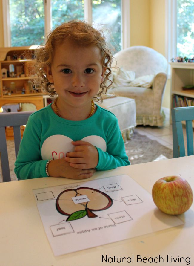 Apple activities for preschoolers, Apple science activities for preschool and Kindergarten, fine motor skills lacing activity with an Apple Theme, Preschool free printables Great Apple books, Apple Theme sensory play and The Perfect Fall Preschool Theme.