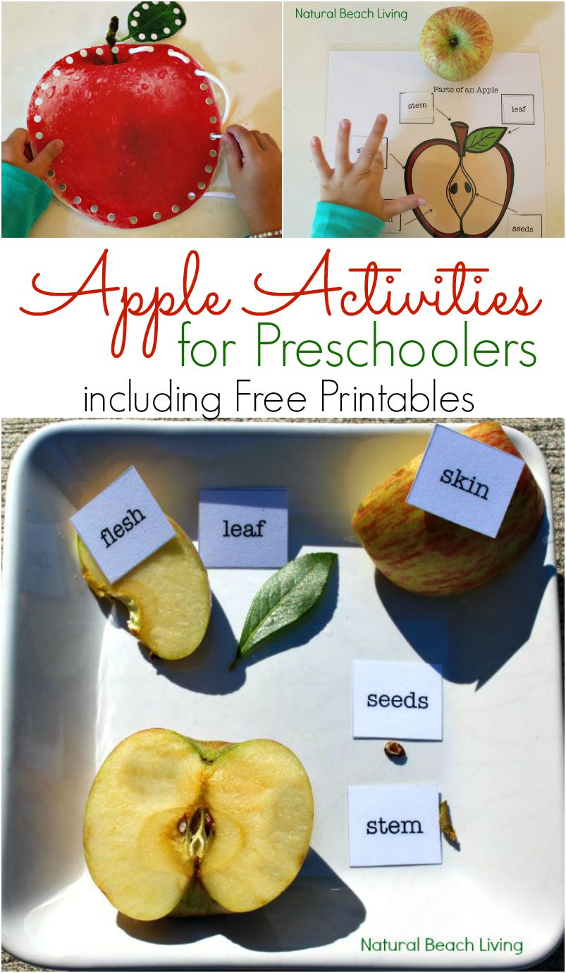 Apple Activities for Preschoolers – Apple Science Free Printables