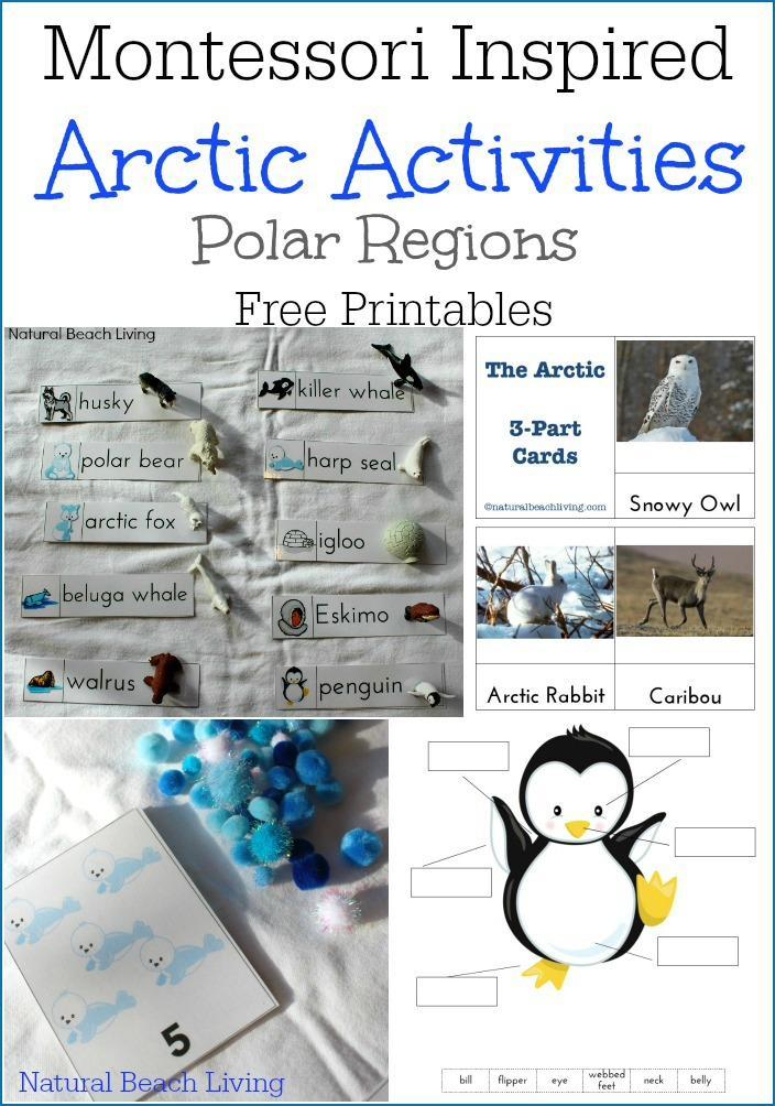 Montessori Arctic Activities, Polar regions, Winter Preschool Themes, lesson plans, activities, and printables. Perfect for weekly or monthly themed learning or unit studies. Preschool book lists, preschool activities, art, and crafts. #preschool