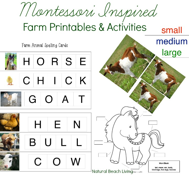 image relating to Free Printable Preschool Lesson Plans referred to as 200+ of the Excellent Preschool Themes and Lesson Courses