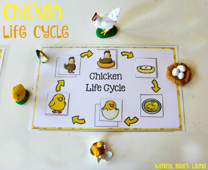 Chicken Life Cycle Free Printables Natural Beach Living