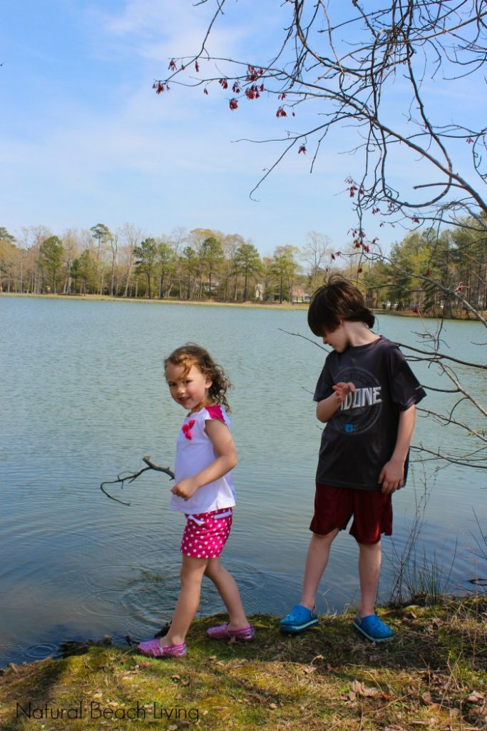 Exploring Life at the Pond, Natural learning, Science and Nature, Family Fun, Spring Activities and Unit Study, Free Pond Life Scavenger Hunt Printables