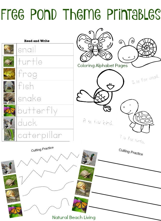 Pond Theme Activities, STEM, Free Printables, coloring pages, Preschool skills, Montessori Inspired, Natural Learning, outdoor learning, Science, Math,
