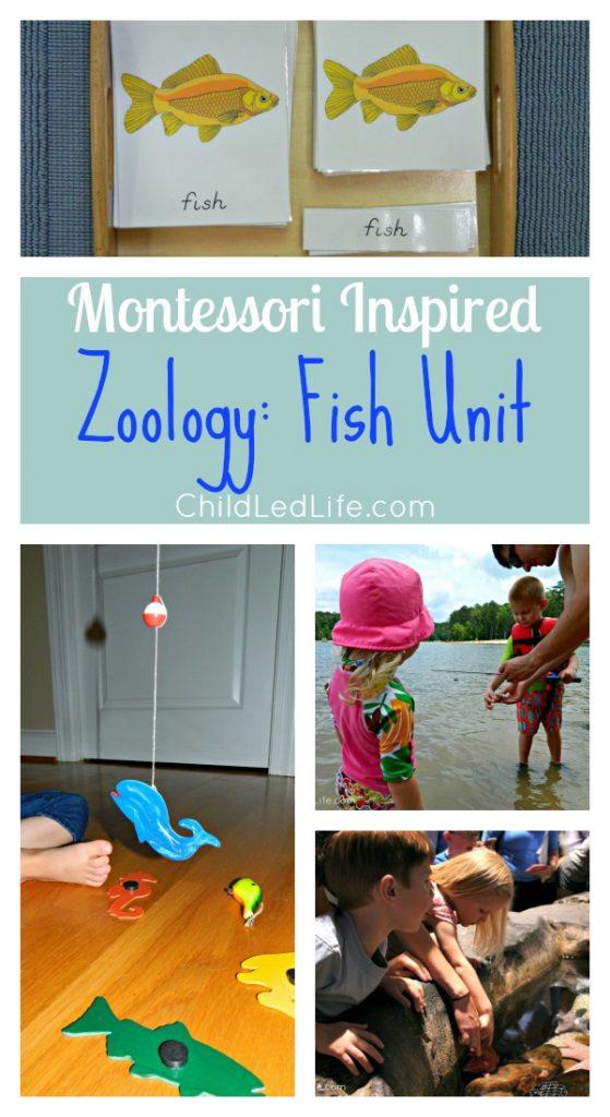 Zoology fish unit