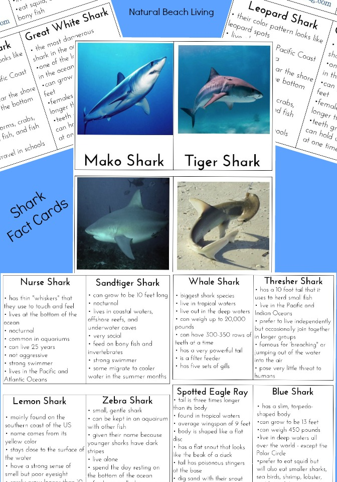 The Best Ocean Unit Study for Kids - Ocean Lesson Plans