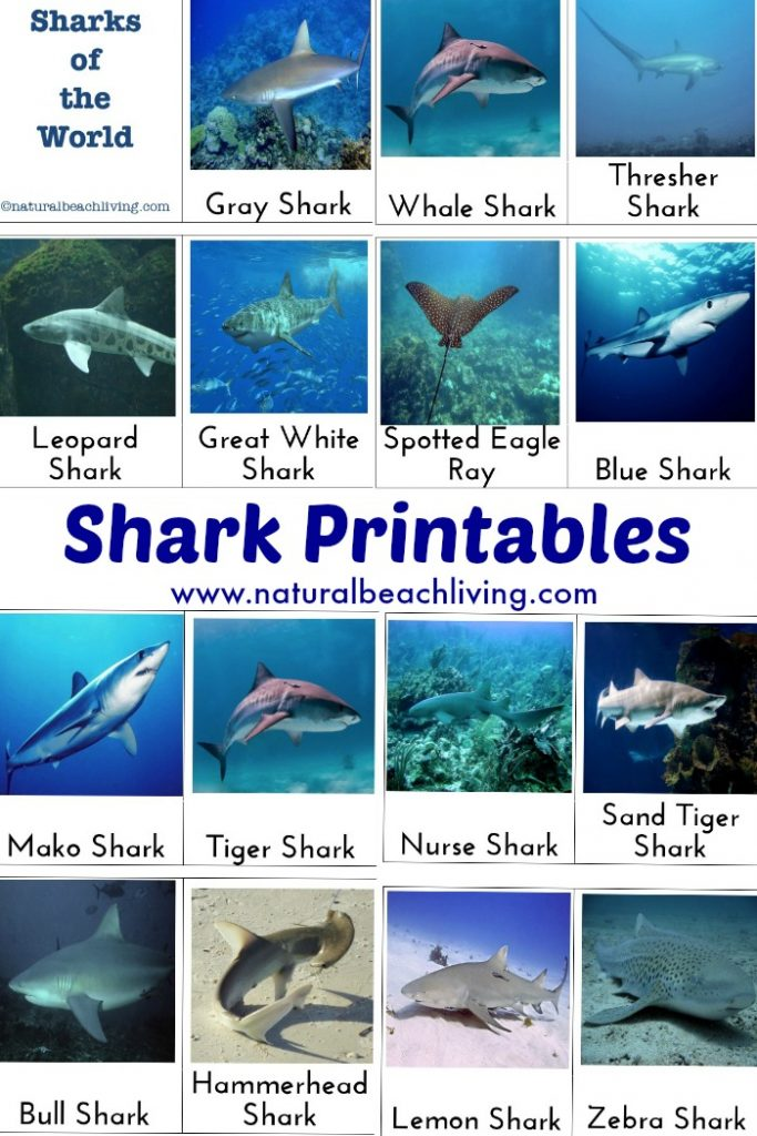 shark activities for kids with free printables natural beach living