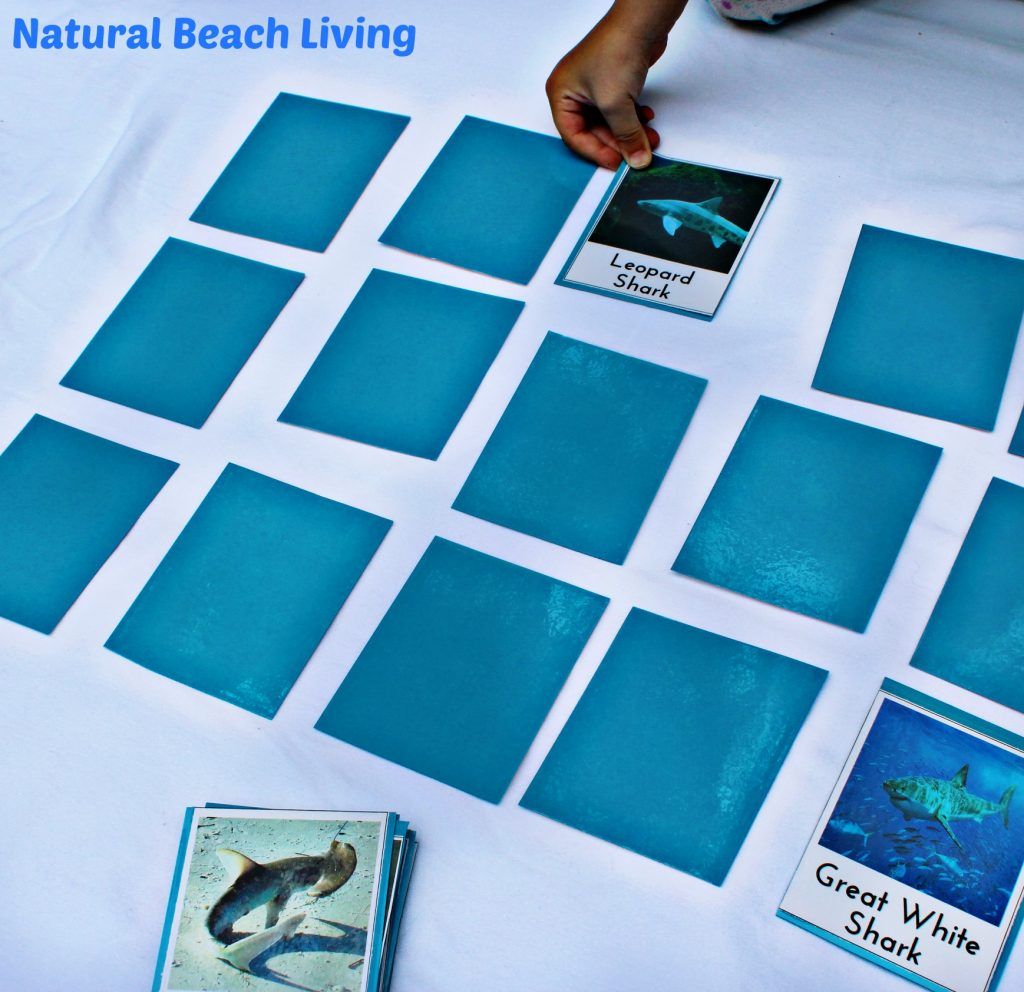 Shark Activities for Kids with Free Printables - Natural Beach Living