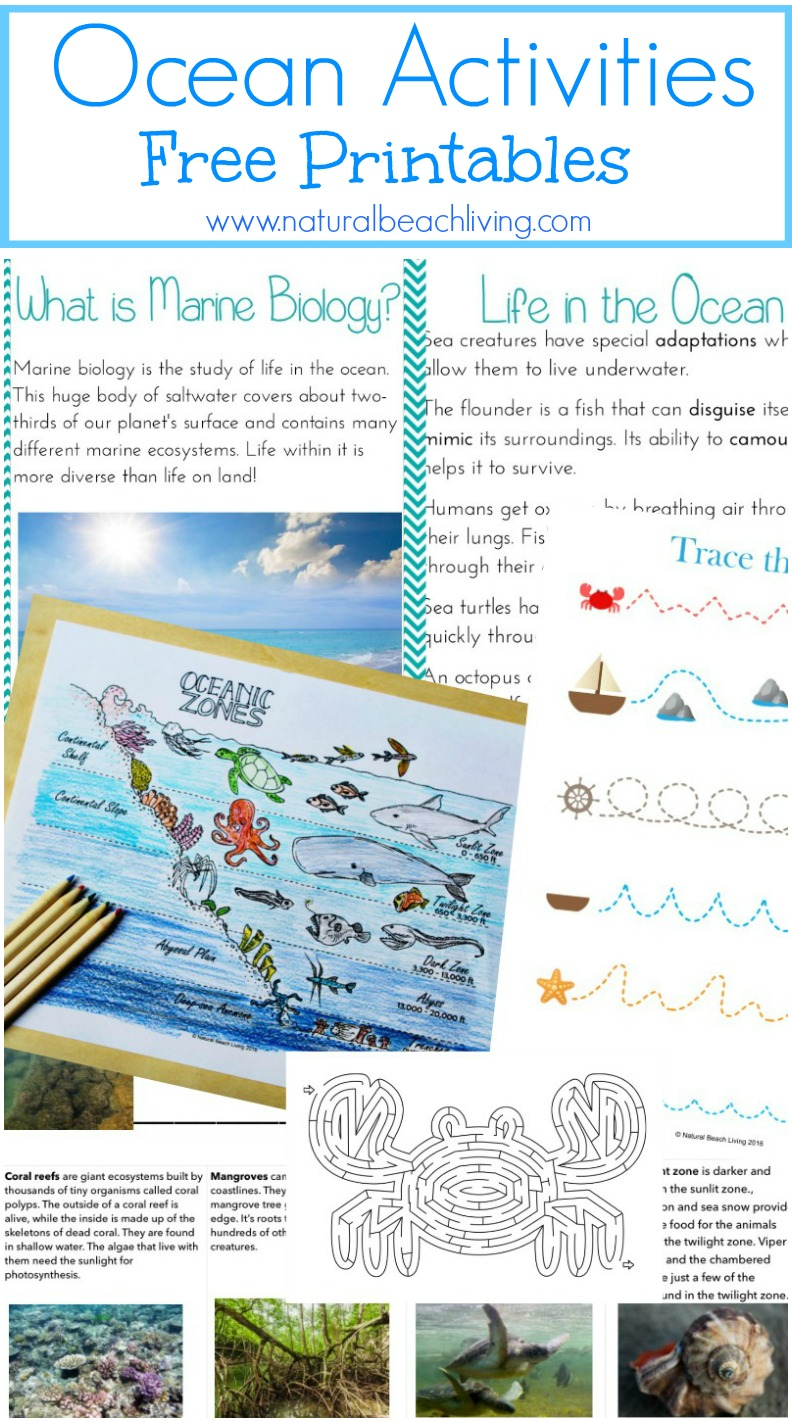 Montessori Theme Ocean Preschool Activities & Printables, The Best way to learn Ocean Zones, Ocean Animals, 3-part cards, Montessori Math, Under the Sea