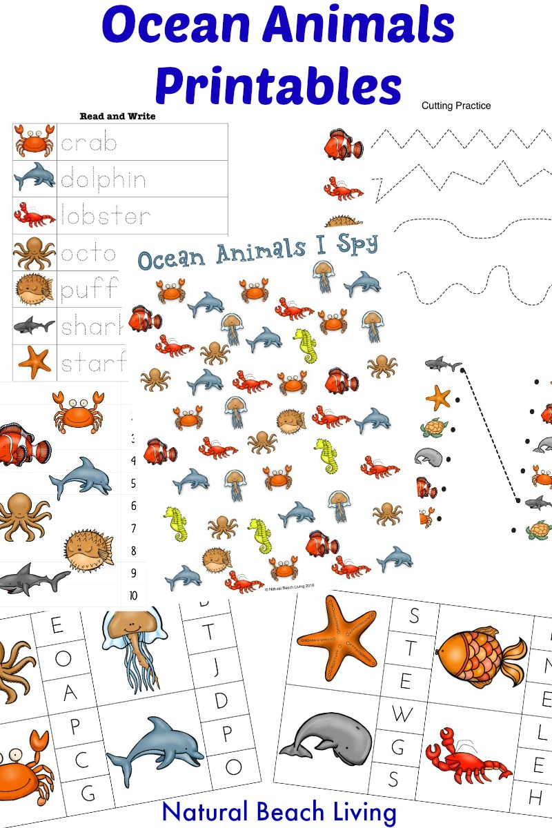 image relating to Printable Ocean Animals identified as The Least complicated Ocean Pets Preschool Functions and Printables