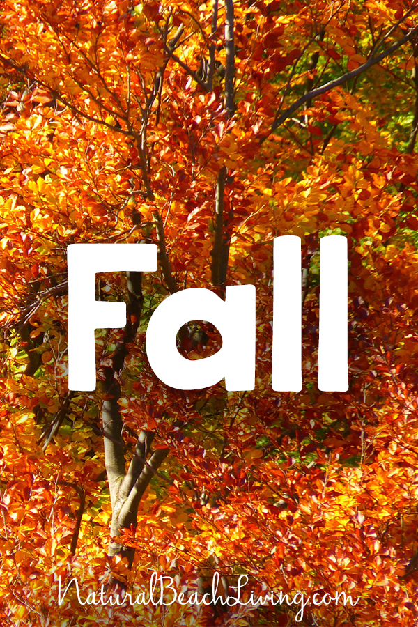 Tons of GREAT FALL PRINTABLES for kids and families, fall themes, Math, Science, Holiday, Montessori, FIAR, Unit Studies and more