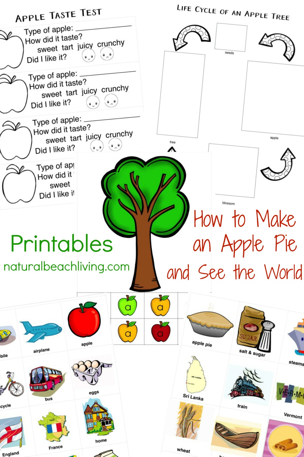 Best Apple Activities For Preschoolers and Kindergartners