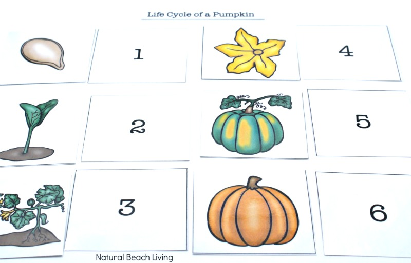 photograph regarding Pumpkin Life Cycle Printable identify Pumpkin Routines for Little ones - Pumpkin Topic Lesson Program