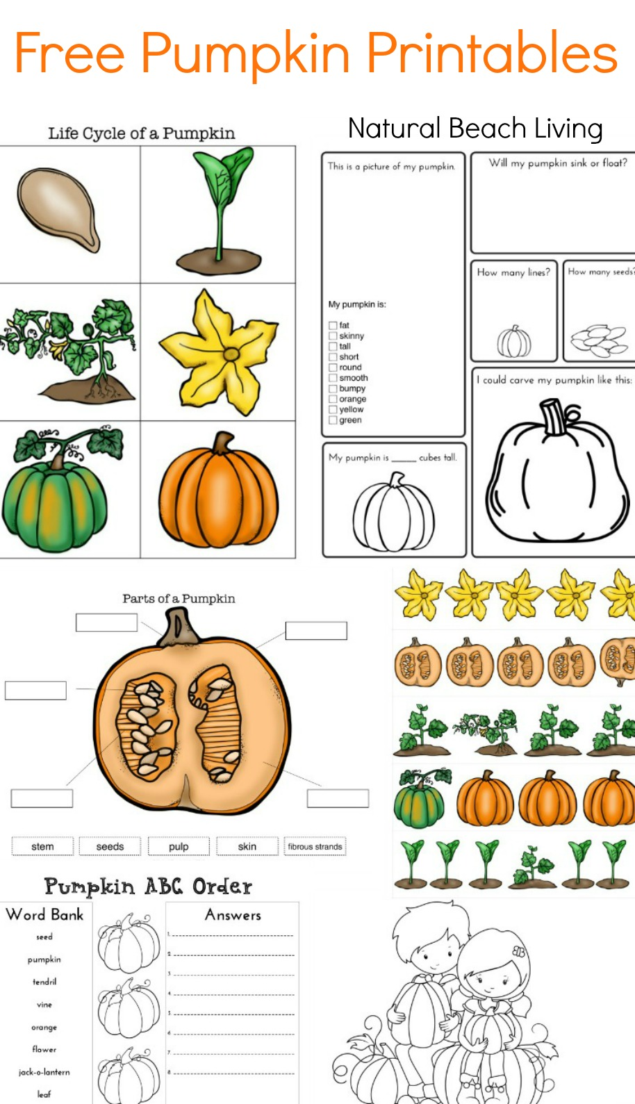 image about Life Cycle of a Pumpkin Printable called Pumpkin Pursuits for Young children - Pumpkin Concept Lesson System