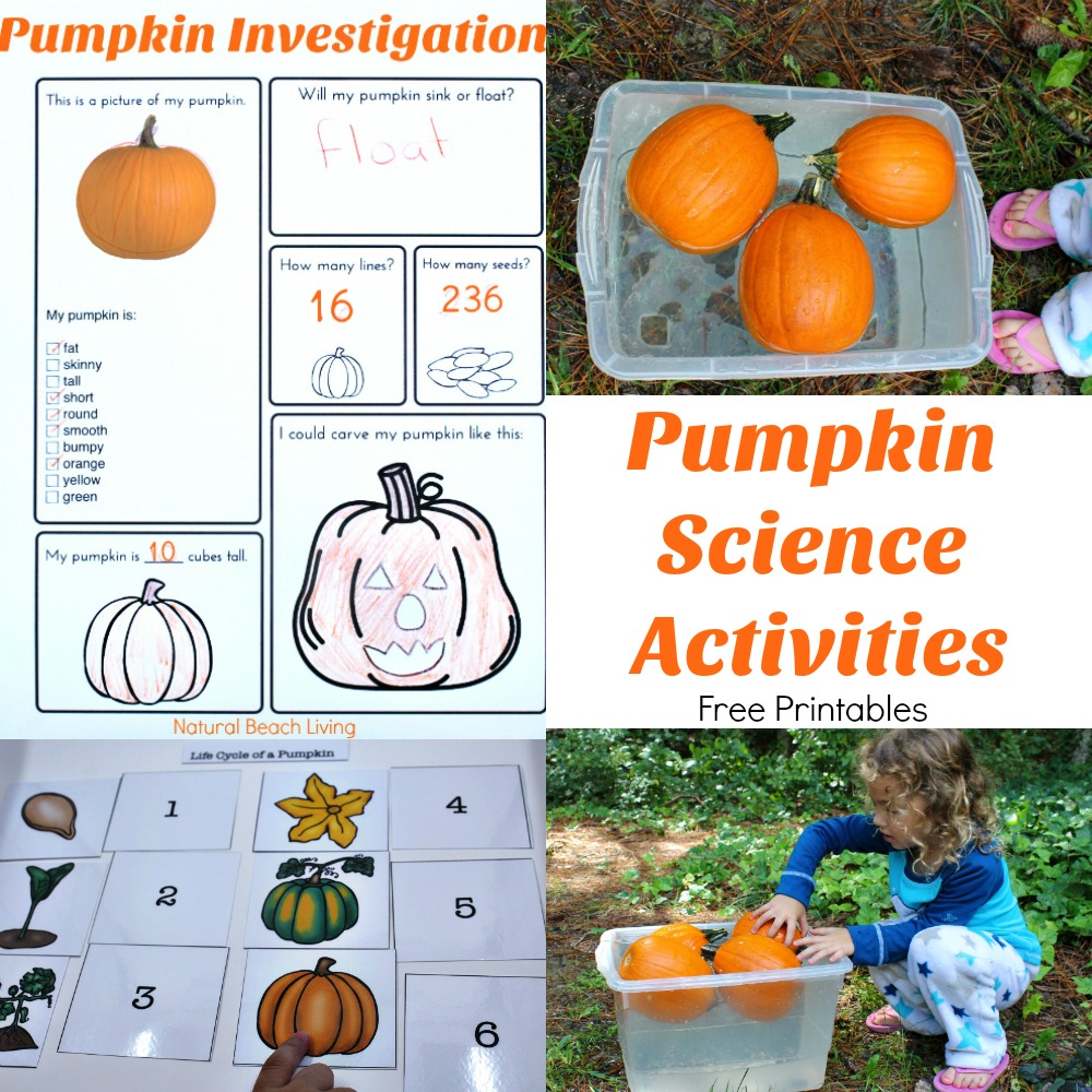 23+ Halloween Science Experiments for Kids, Super Cool Halloween Science and STEM activities, including Erupting Pumpkin Volcanos, Halloween Slime, Candy Science, Pumpkin Science Activities, Halloween Science Projects for preschool and up
