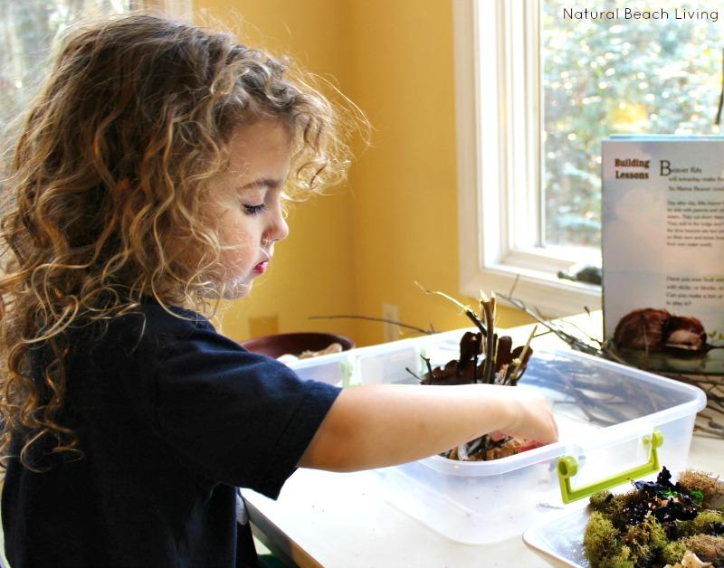 The Perfect Animal Habitat Activities for Preschool, STEM, Building animal habitats, Reggio Emilia Provocations, Sensory bins, Early Childhood Education