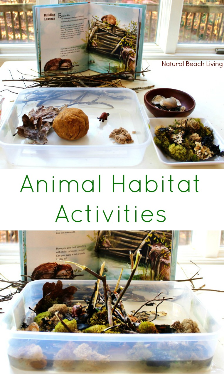 The Best Animal Habitat Activities for Preschoolers and Kindergarten, STEM for Preschoolers, Building animal habitats with preschoolers through Reggio Provocations, Animal Sensory bins and animal research for kids. STEM Activities for Kids with Hands on Activities