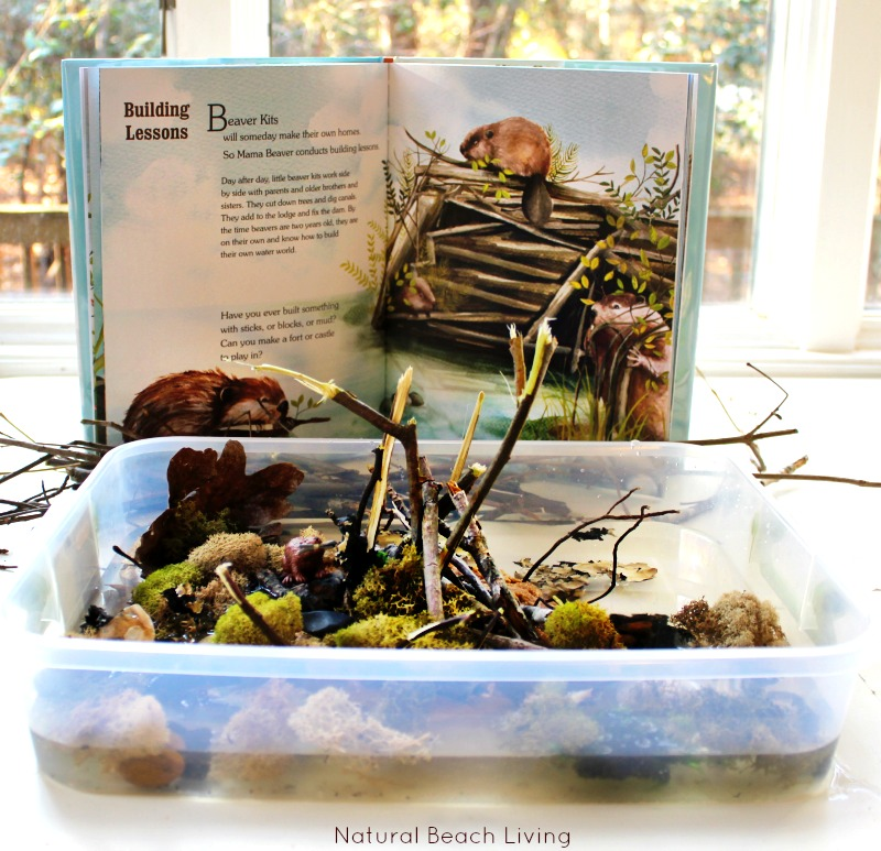 Animal Habitat Activities for Preschool
