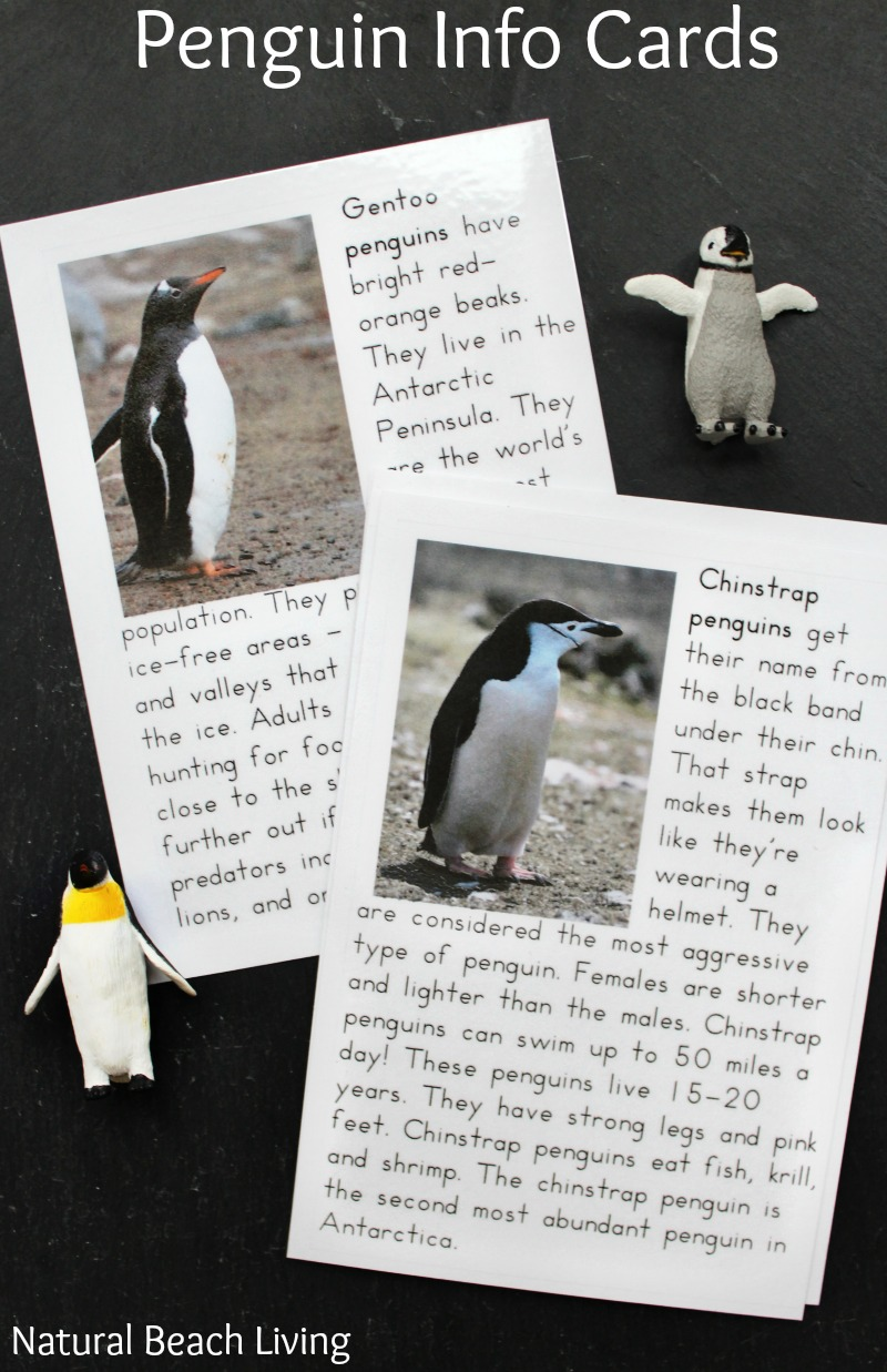 The Best Penguin Activities for Preschoolers and Kindergarten, Perfect winter activities for preschoolers, Hands on Antarctica Activities and ideas for preschool and Kindergarten, Montessori preschool activities, Penguin preschool themes, Preschool Activities, Penguin printables, Montessori Printables,