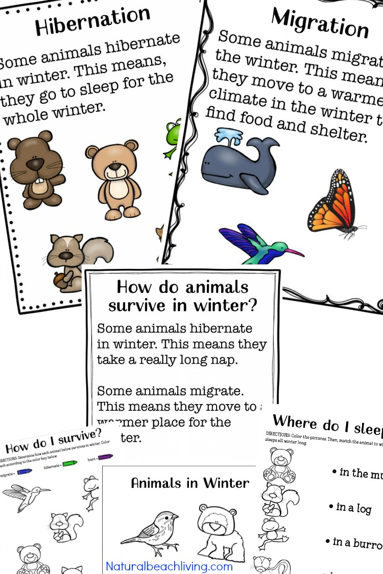 The Ultimate Winter Animals For Preschool Activities Natural Beach