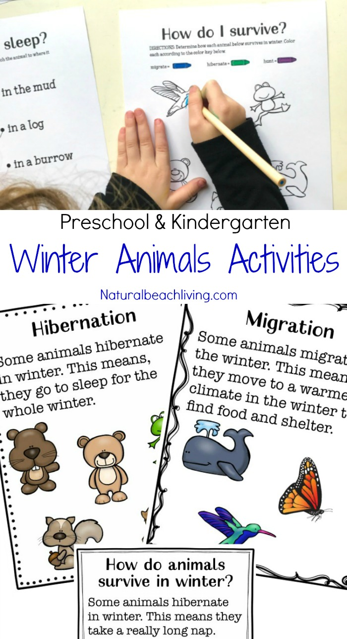 You'll Love These Winter Animals for Preschool Ideas, these winter animal printables are perfect for kids, teaching ideas, hands on learning, coloring pages