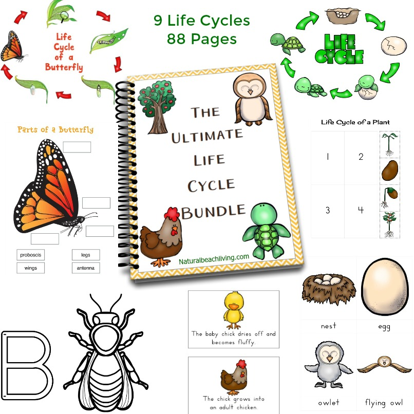 Frog Life Cycle Activities, Free Printables for life cycle of a frog, Frog Unit Study perfect for the Spring themes, Hands on learning activities for preschool and kindergarten, Preschool Pond Theme, Montessori Activities and Letter F Preschool