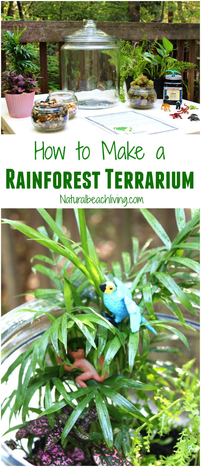How to Make a Rainforest Terrarium for Kids, Learn about the Rainforest Animal Habitat, The Best DIY Rainforest Terrarium and ecosystem activities for kids, Water Cycle activities and Animal Habitat Activities, Hands-on activities for kids