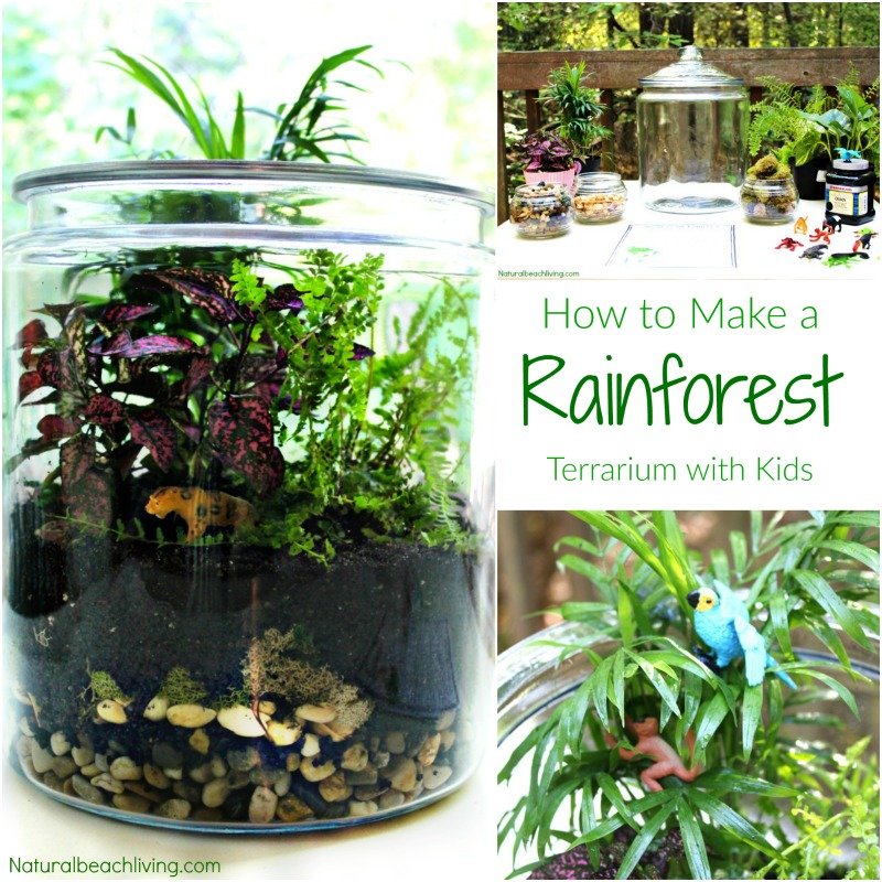 How To Make A Rainforest Terrarium With Kids Natural Beach Living