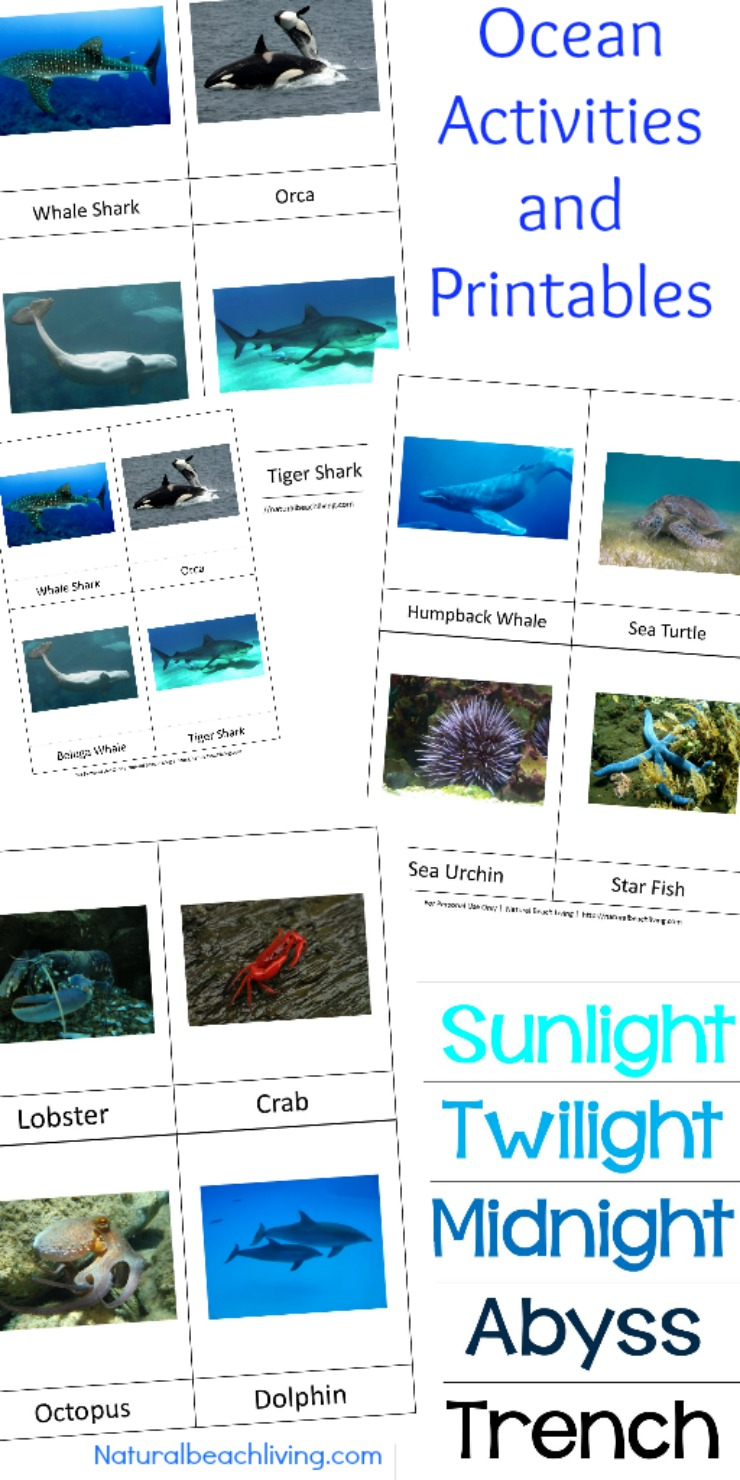 These free ocean printables and Montessori ocean activities are for preschoolers through early elementary. Perfect for homeschooling or for an ocean preschool theme The Best way to learn Ocean Zones, Montessori Math and Under the Sea preschool theme activities  #Montessori #homeschool #oceantheme #freeprintables #preschool #kindergarten.