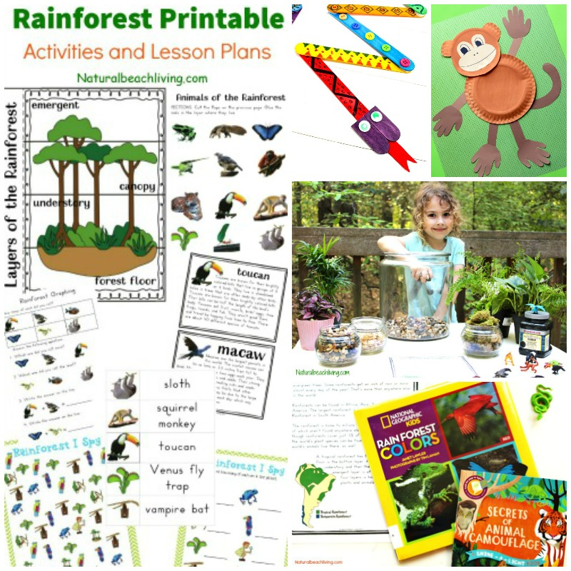 image relating to Rainforest Printable named The Least complicated Rainforest Pursuits for Youngsters Topic - Organic