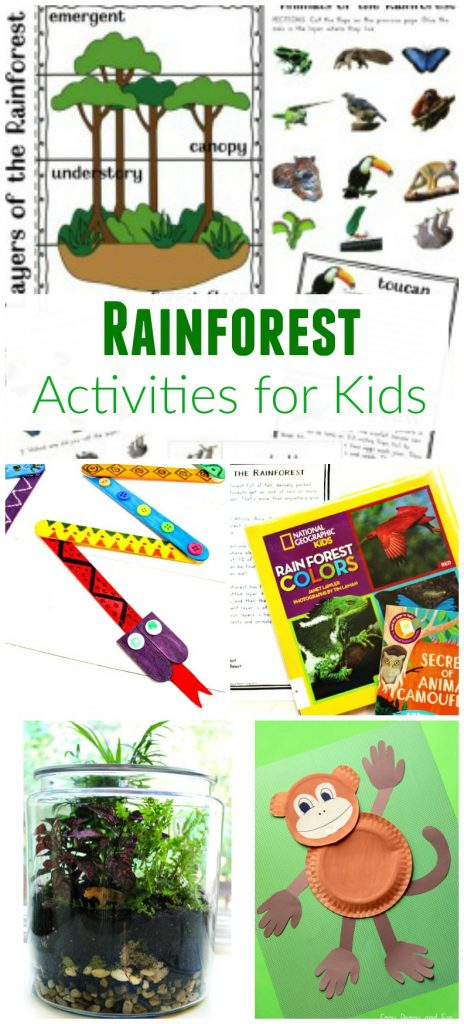 Rainforest Theme, Rainforest activities