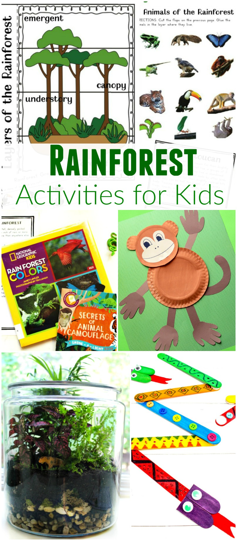 The Ultimate Rainforest Activities Kids Theme Natural Beach Living
