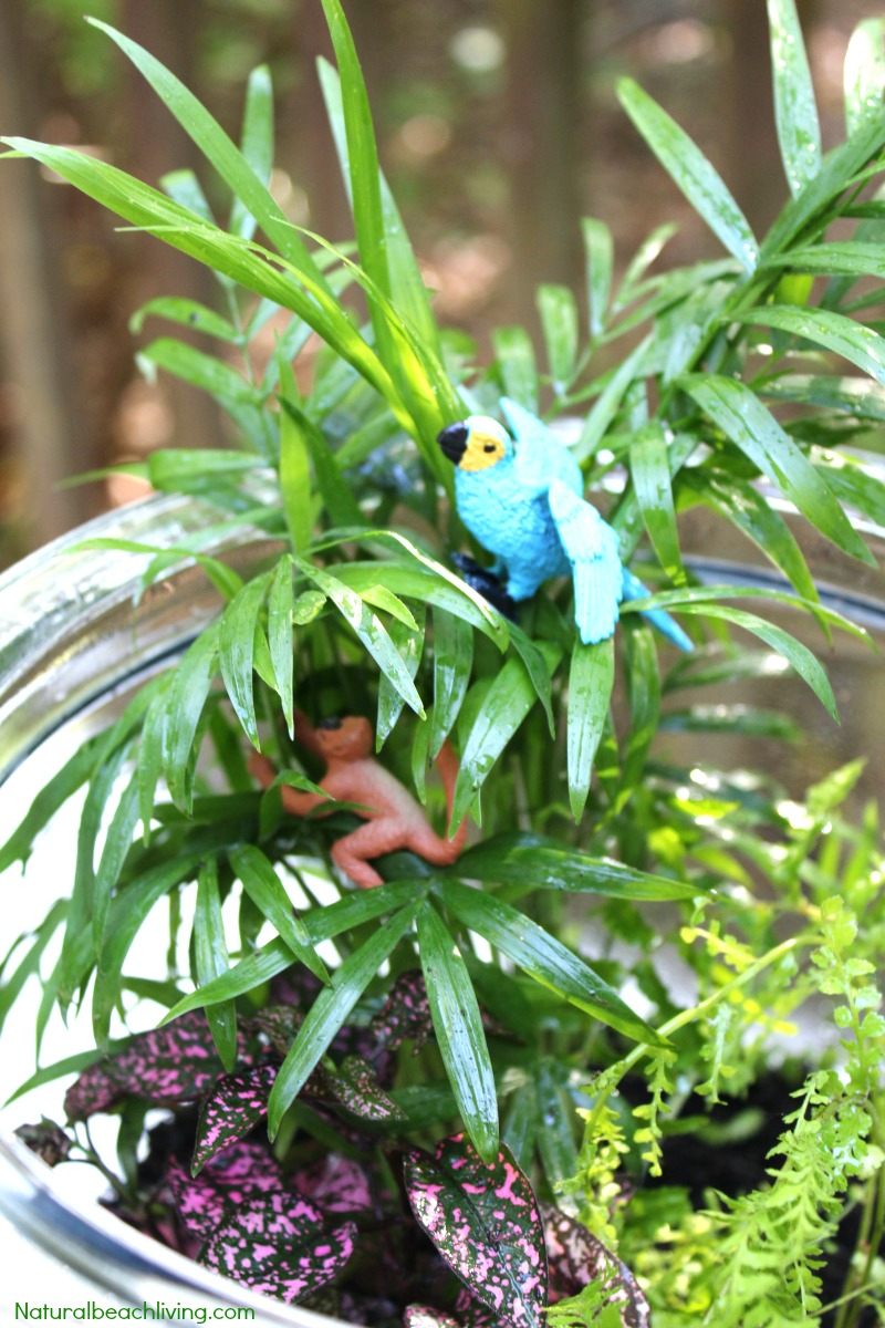 How to Make a Rainforest Terrarium with Kids, Learn about the Rainforest Animal Habitat, The Best Rainforest Terrarium and ecosystem activities for kids, Water Cycle activities and Amazing Hands-on activity for kids with habitat activities