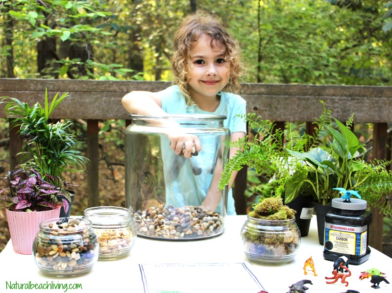 How to Make a Rainforest Terrarium with Kids - Natural Beach Living