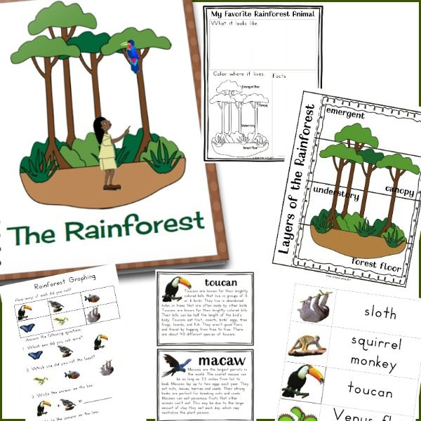 photograph relating to Rainforest Printable known as Training Around the Rainforest