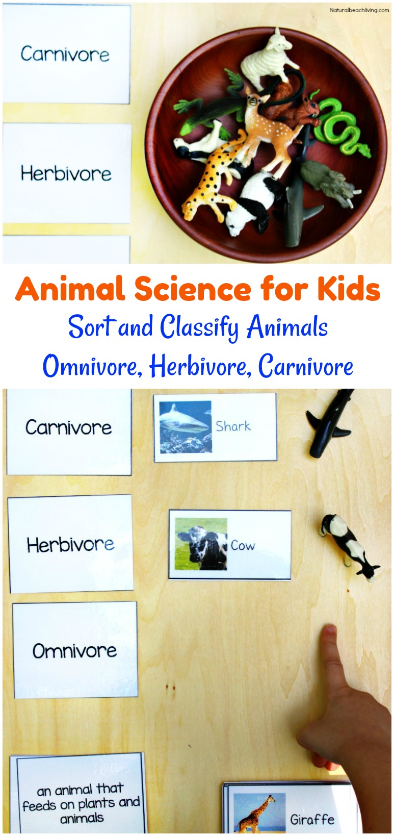 Montessori Science for Kids Animal Sort Activity & Printables, food chain, Hands on Activities for Preschool & Kindergarten, Omnivore, Herbivore, Carnivore