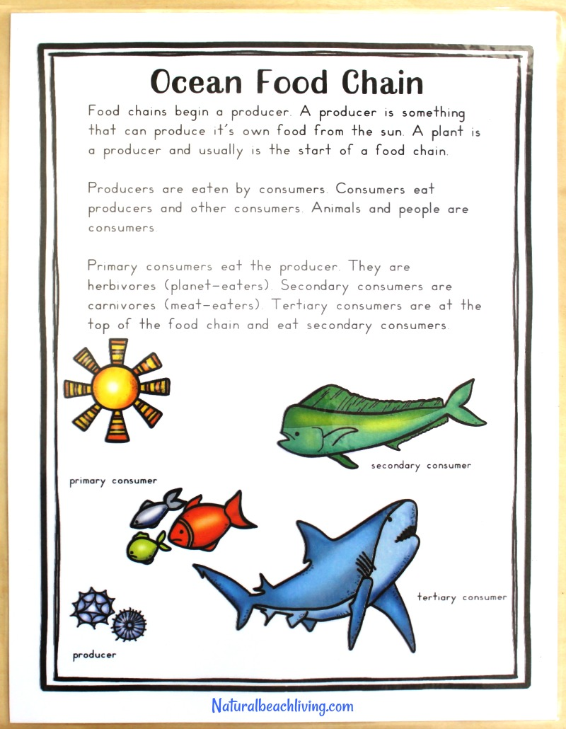 photograph about Food Chain Printable Activities identified as The Easiest Shark Printable Actions for Youngsters - Shark Lesson