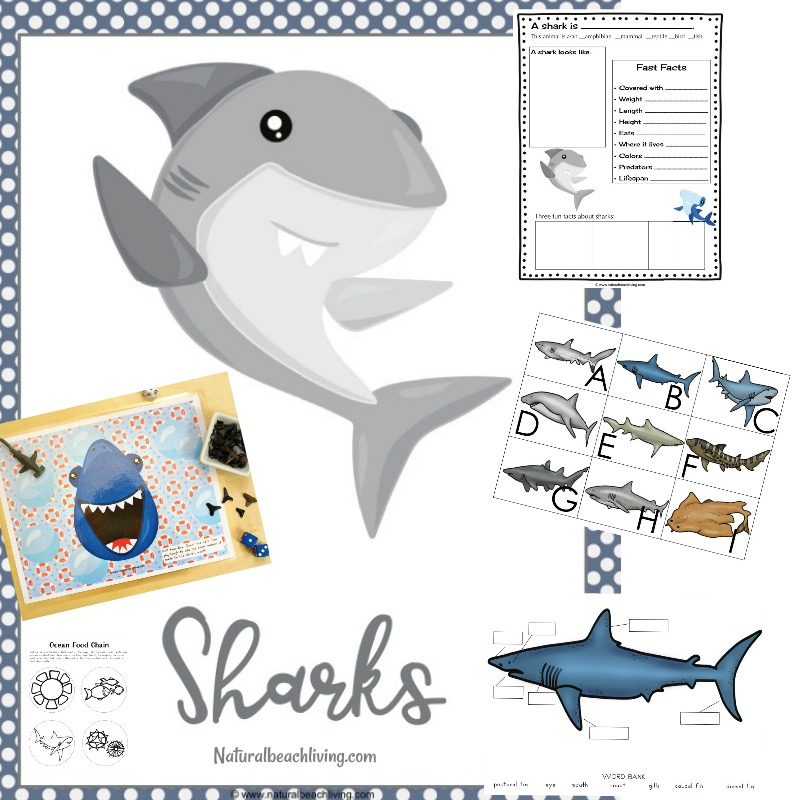 picture about Food Chain Printable Activities called The Ideal Shark Printable Things to do for Small children - Shark Lesson