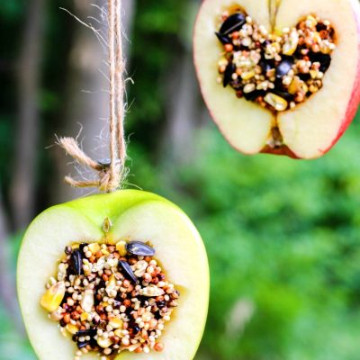 How to Make Apple Birdseed Homemade Bird Feeders Everyone Loves