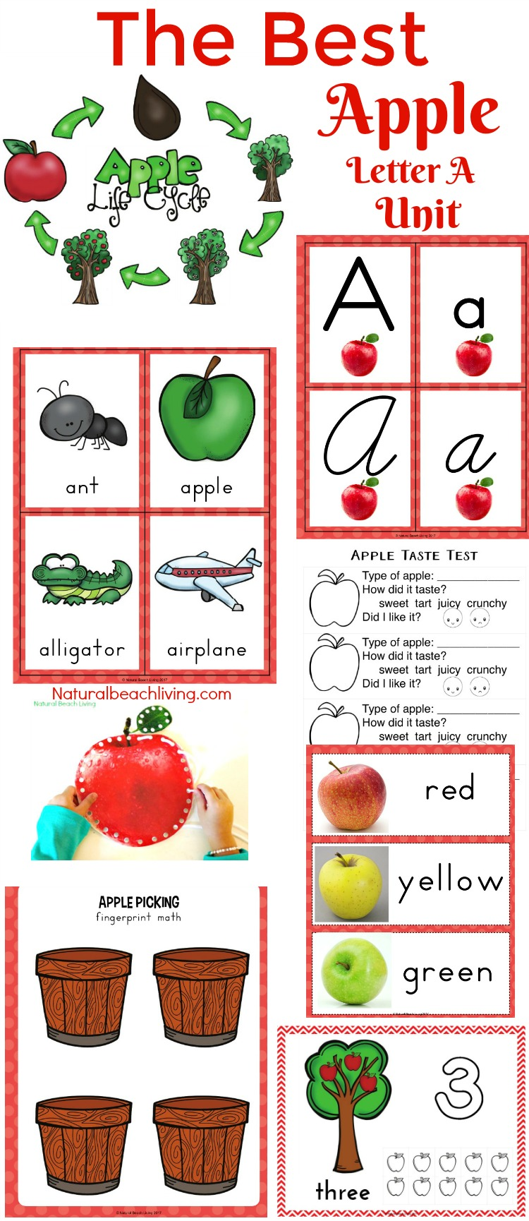 picture about Apples to Apples Cards Printable titled 30+ No cost Apple Printables for Preschool and Kindergarten