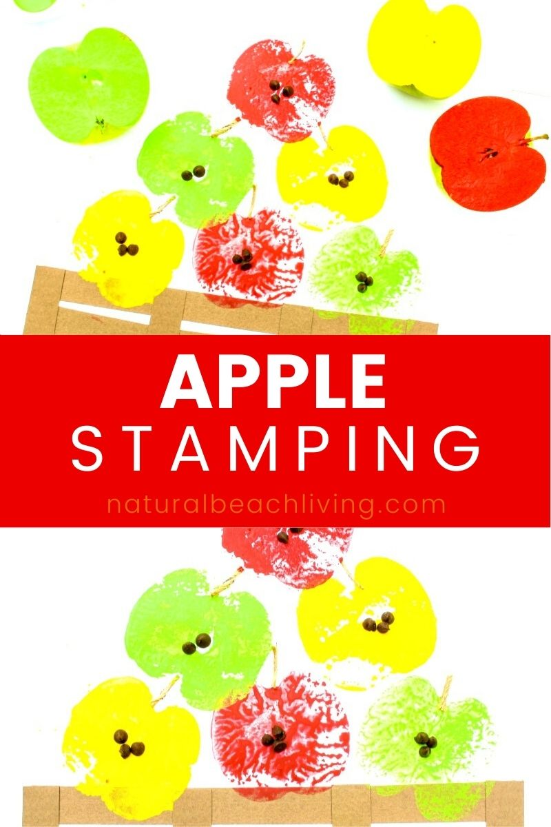 How to Make The Best Adorable Apple Stamping Craft with Kids, Easy Apple Stamps for Preschool and Apple Stamping Art Activity, Fun Apple Activities, Apple Crafts, Apple theme for preschoolers, Fall Crafts,