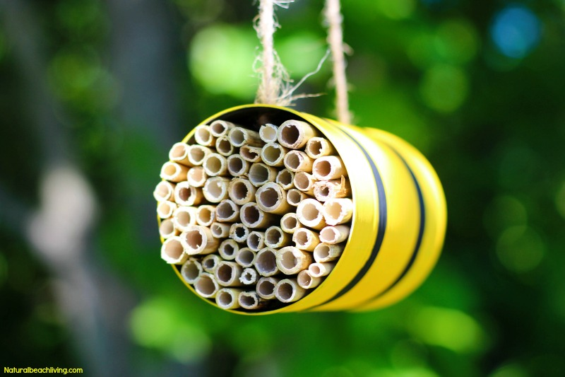 How To Make A Mason Bee Habitat Perfect Life Cycle Of A