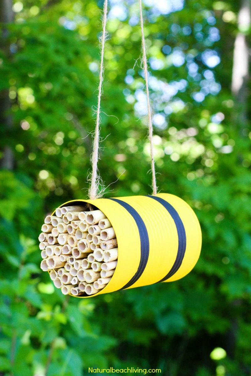 How to Make a Mason Bee Habitat – Perfect Life Cycle of a Bee Activities