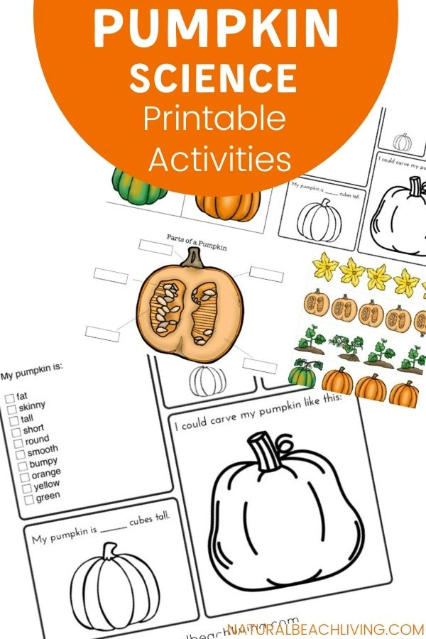 Pumpkin Activities for Kids to Enjoy during Fall. Grab these Free Pumpkin Printable Lesson Plans and Pumpkin Science Activities, including the Pumpkin Life cycle, Pumpkin STEM Activities, Pumpkin Printables, Pumpkin Coloring Pages, Pumpkin Sensory Play and more