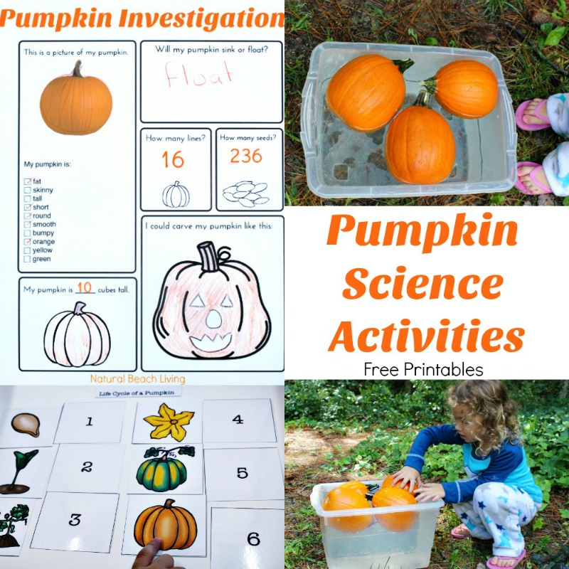 image regarding Pumpkin Life Cycle Printable known as Pumpkin Things to do for Youngsters - Pumpkin Concept Lesson Program