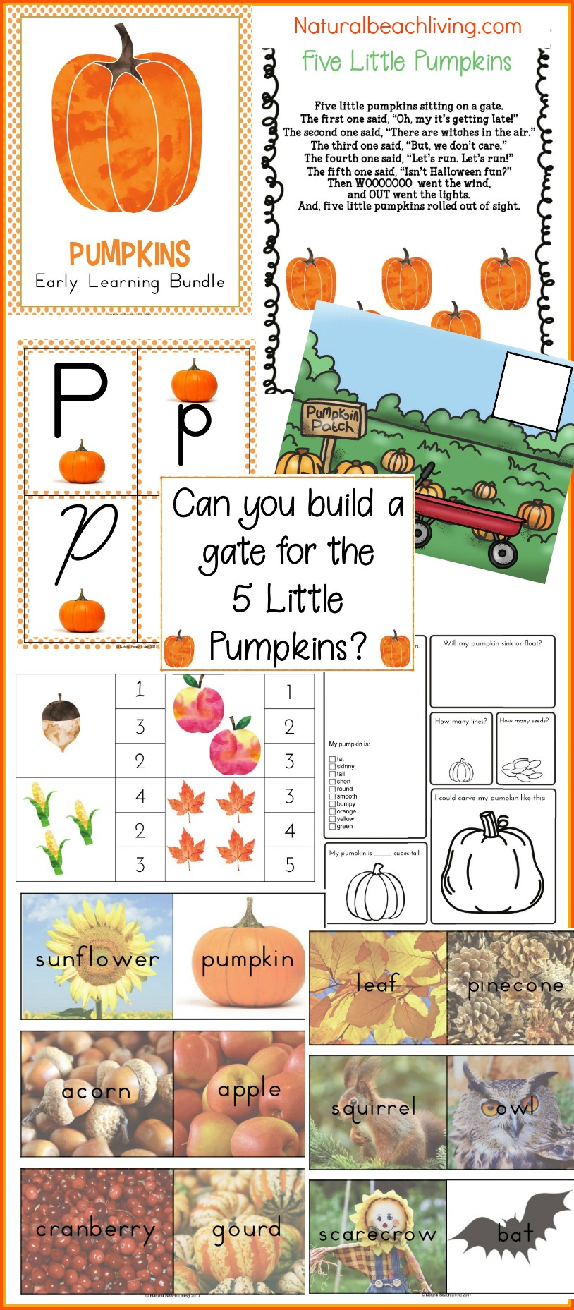 Pumpkin Activities for Kids, Pumpkin Theme Lesson Plan, Pumpkin Life cycle, Pumpkin Free Printables, Fall Science, FIAR, Pumpkin Printables, Pumpkin Coloring Pages, Pumpkin activities for kids, STEM